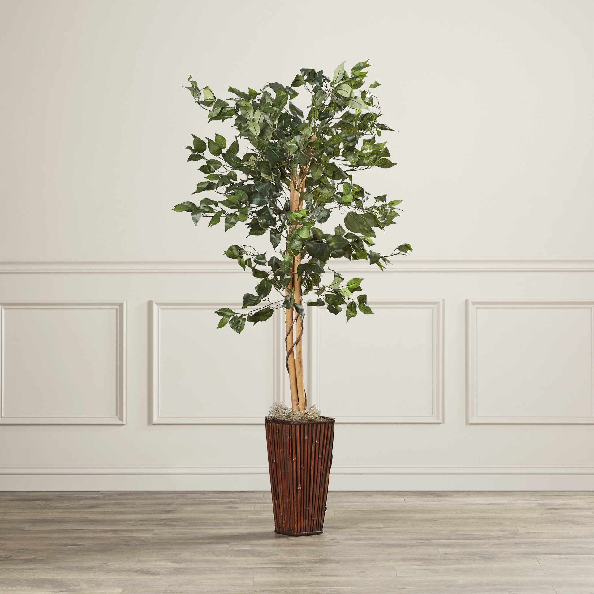 Charlton home ficus tree in decorative vase reviews wayfair reviewsmspy
