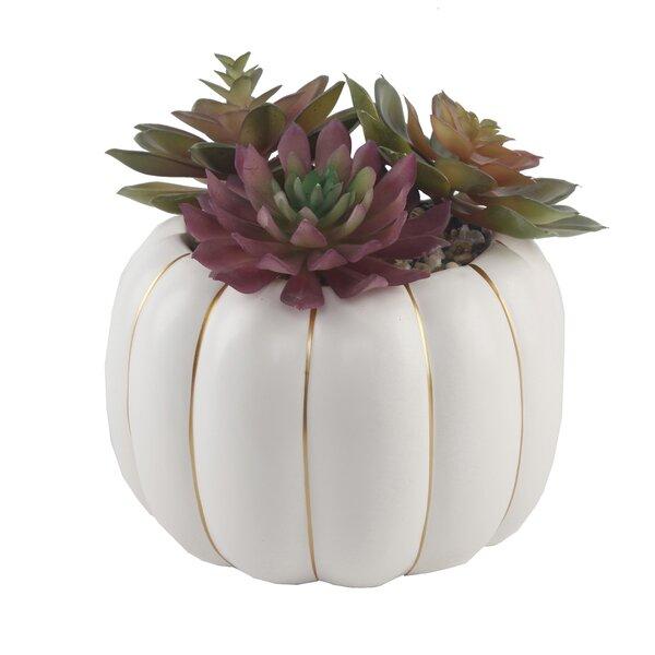 6.5 Desktop Faux Succulent Plant in Ceramic Pumpki
