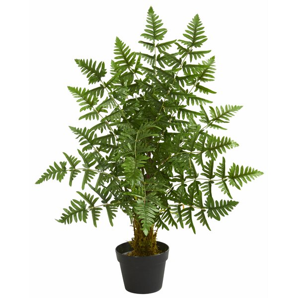 Ruffle Fern Floor Palm Tree in Planter by Charlton Home