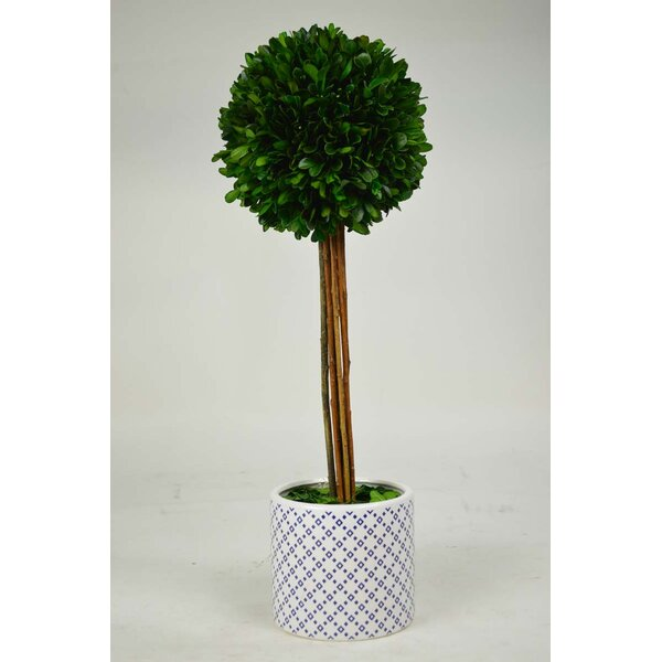 Desktop Boxwood Topiary in Planter by GT DIRECT CORP