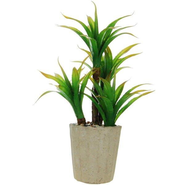 Desktop Succulent Plant in Round Concrete Pot by Bay Isle Home