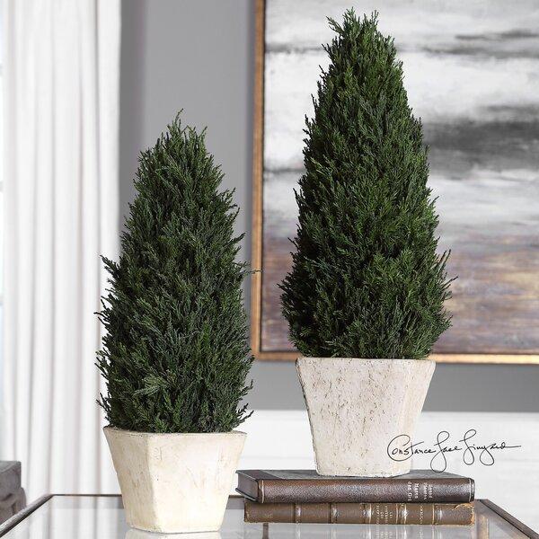 2 Piece Cedar Desktop Topiary in Pot Set by Charlton Home