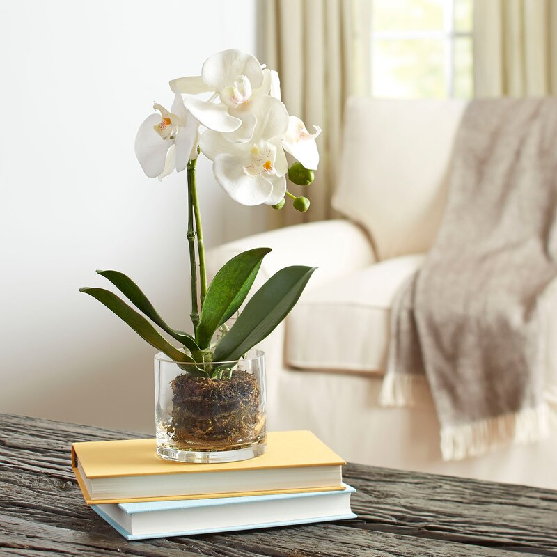 Faux Orchid In Glass Vase Wayfair