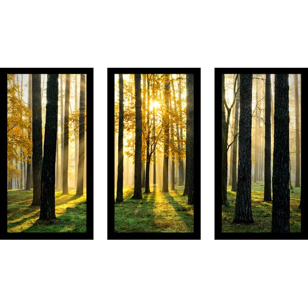 Many Paths 3 Piece Framed Photographic Print Set by Picture Perfect International