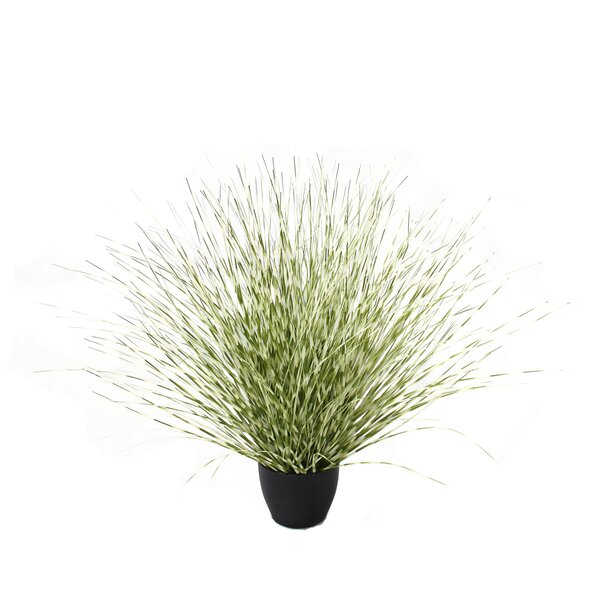 Floor Zebra River Grass in Pot (Set of 4) by Bay Isle Home