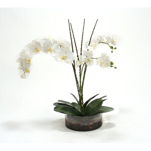 Waterlook Cream White Phaleanopsis Orchids in Low Round Glass Vase by Distinctive Designs