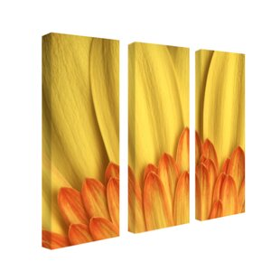 Flame by Aiana 3 Piece Photographic Print on Wrapped Canvas Set by Trademark Fine Art
