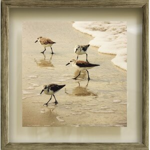 Birds of the Shore II by Jairo Rodriguez Framed Photographic Print by Star Creations
