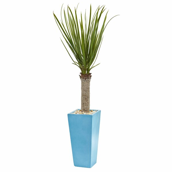 Artificial Floor Yucca Tree in Planter by Latitude Run
