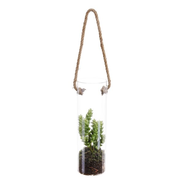 Hanging Succulent Plant in Glass (Set of 2) by Highland Dunes