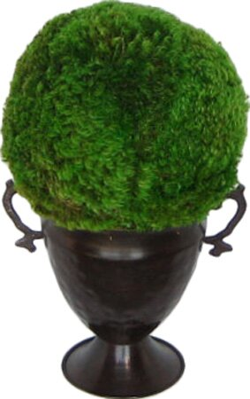 Metal Trophy Small Vase with Moss Topiary Ball by Bougainvillea
