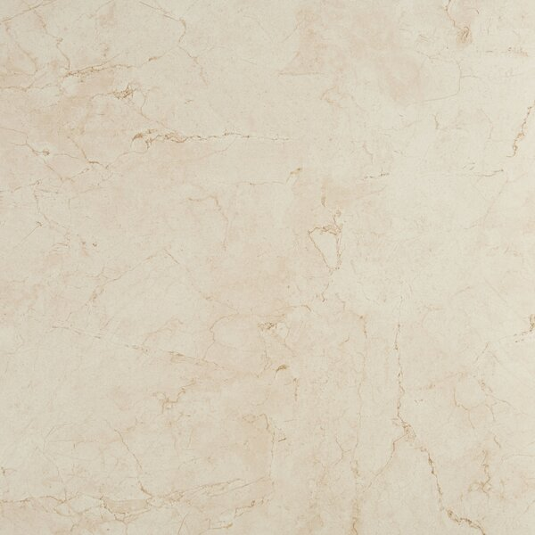 Florentine 24 x 24 Porcelain Field Tile in Marfil by Daltile