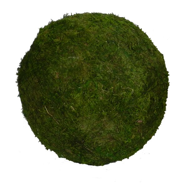 Ball Decor Desktop Moss Grass (Set of 3) by Gracie Oaks