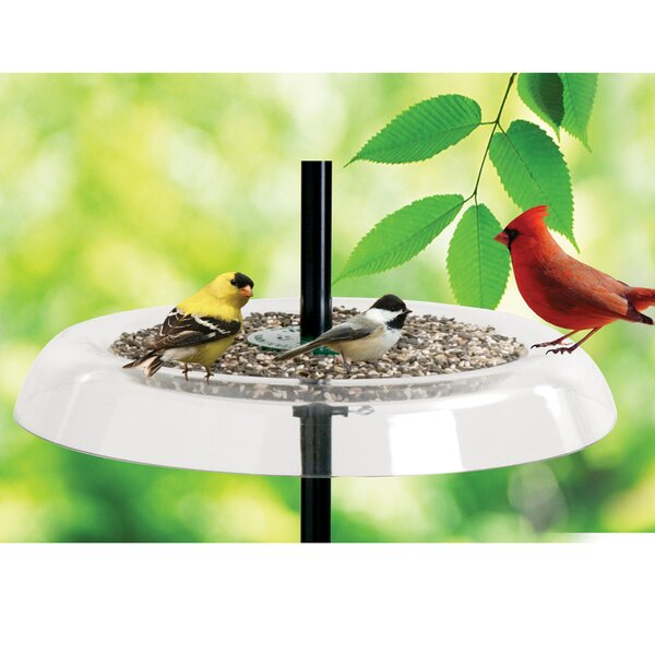 Giant Seed Tray Bird Feeder and Squirrel Guard by Droll Yankees