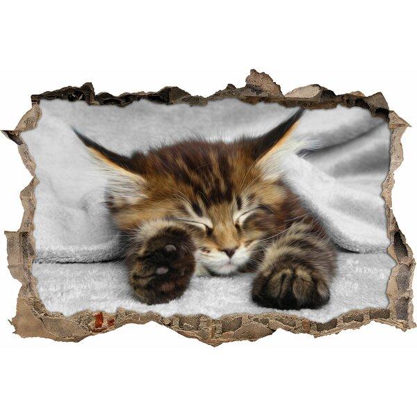 Pixxprint wandtattoo schlafende katze mit grossen ohren for Whirlpool garten mit rollrasen balkon katze