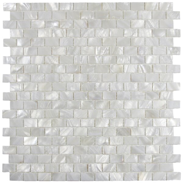 Arctic 1 x 2 Seashell Mosaic Tile in White by CNK Tile