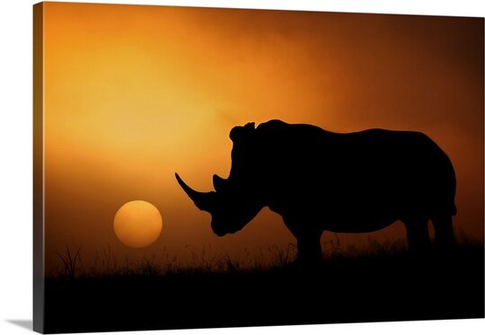 Rhino Sunrise by Mario Moreno Photographic Print on Canvas by Canvas On Demand