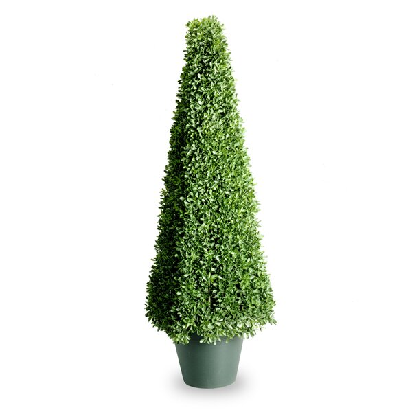 Boxwood Mini Square Topiary in Pot by National Tree Co.