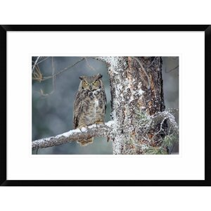 'Great Horned Owl Adult Perching' Framed Photographic Print by Global Gallery