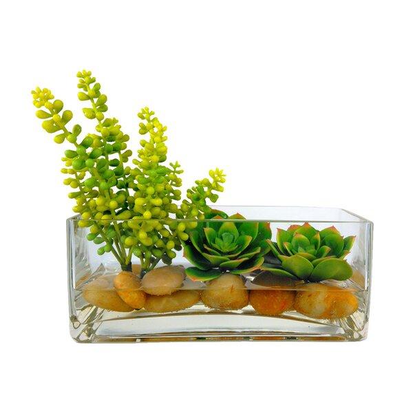Rectangle Desktop Succulent Plant in Vase by Bungalow Rose