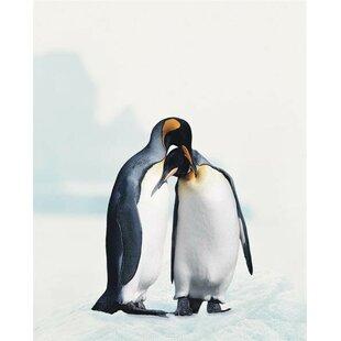 Penguin Print Wayfaircouk