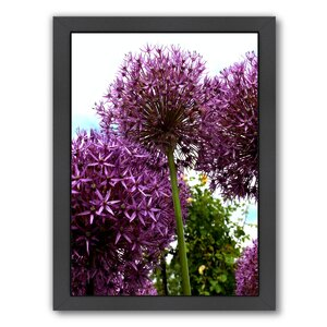'Allium Flower 2' Framed Photographic Print by East Urban Home
