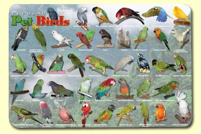 Popular Birds Placemat (Set of 4) by Painless Learning Placemats
