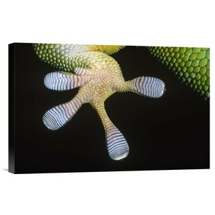 'Madagascar Day Gecko Underside Detail of Foot' Photographic Print on Canvas by East Urban Home