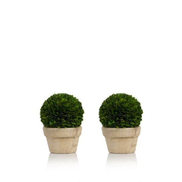 Preserved Ball Potted Desktop Boxwood Topiary in Pot Set (Set of 2) by Alcott Hill