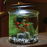 2.5 Gallon Double Bowl Glass Aquarium Kit by Elive