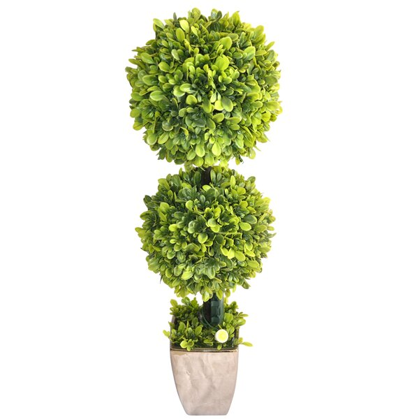 Floor Boxwood Plant in Planter by August Grove