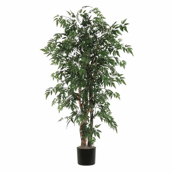 Fir Ming Aralia Executive Tree in Pot by World Menagerie