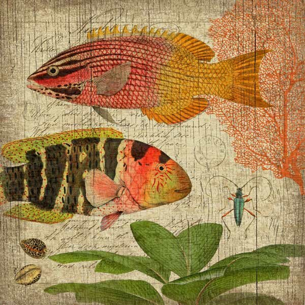 Natural History 1 Wall Art by Graphic Art Plaque by Bay Isle Home