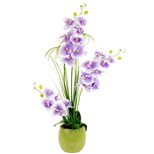 Phalaenopsis Orchid with Grass and a Succulent in a Distressed Pot by LCG Florals