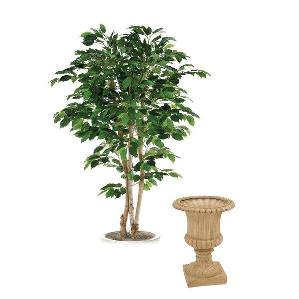 Bushy Green Ficus Tree in Urn by Distinctive Designs