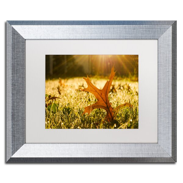 Fall Leaf in Morning Sun Framed Photographic Print by Trademark Fine Art