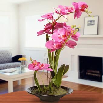 Ophelia Co Vanda Orchids Floral Arrangement In Planter Reviews Wayfair