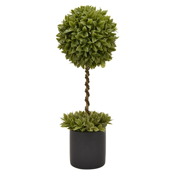Desktop Foliage Topiary  in Pot by Orren Ellis