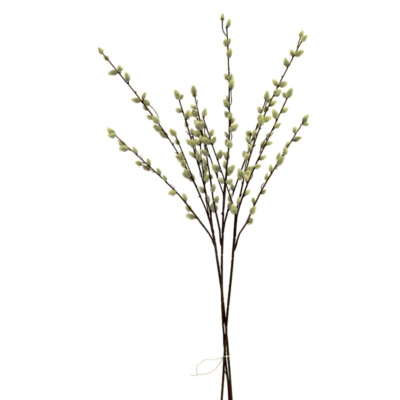 Charlton Home Pussy Willow Branch In Vase Wayfair