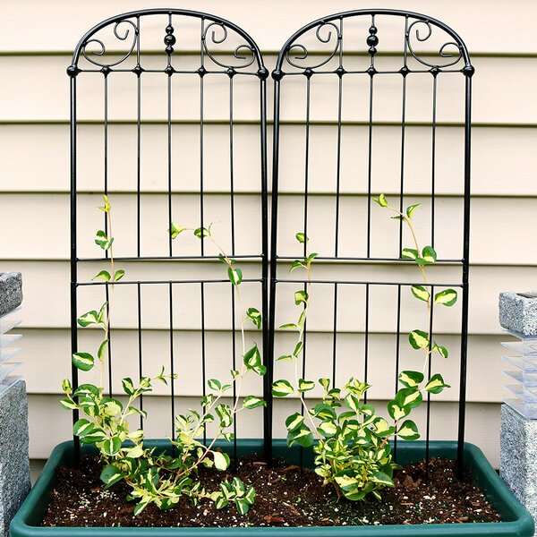 Media Traditional Steel Gothic Trellis (Set of 2) by Charlton Home