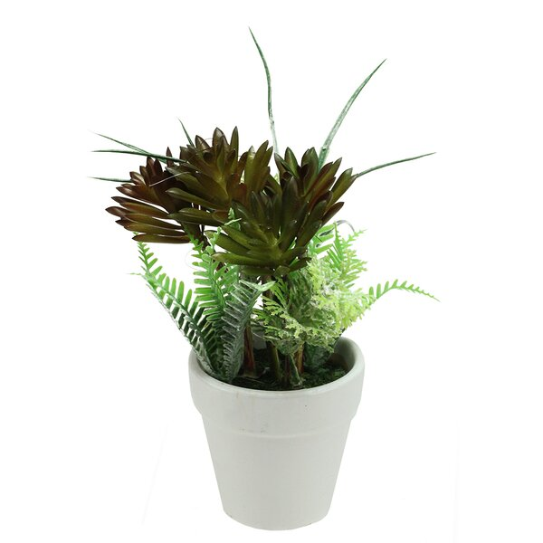 Artificial Succulent and Fern Spring Decoration Desk Top Plant in Pot by Northlight Seasonal