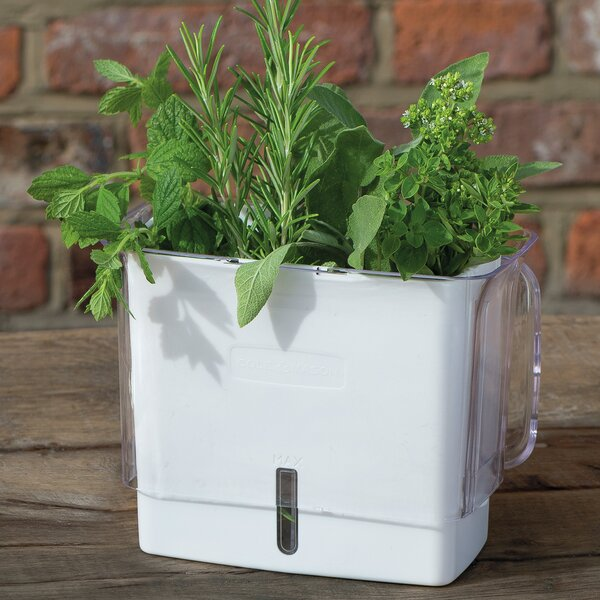 Fresh Herb Keeper Plastic Pot Planter by Cole & Mason