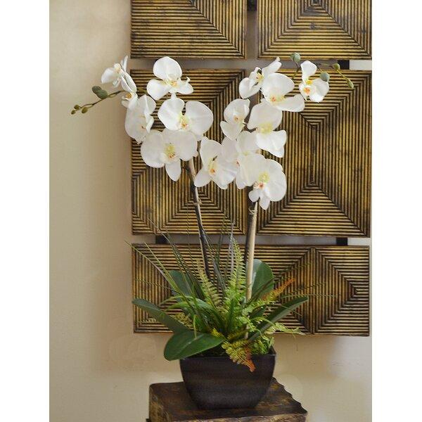 Fern and Foliage Orchid Floral Arrangement in Vase by Orren Ellis