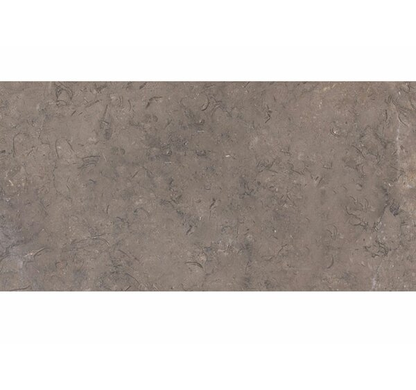 12 x 24 Limestone Field Tile in Gray by Parvatile