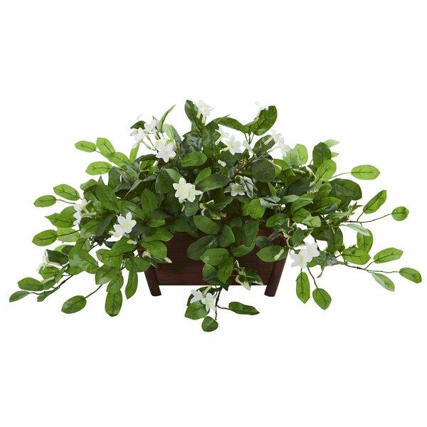 Mix Stephanotis Desktop Flowering Plant in Planter by Charlton Home