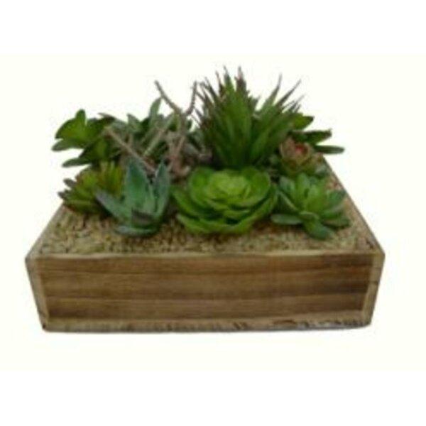 Decorative 7.75 Desktop Succulent Plant in Planter by Bungalow Rose