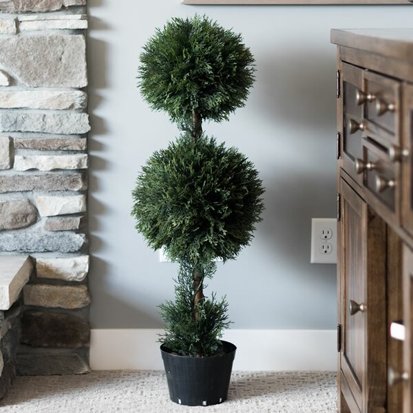 Double Ball Cedar Topiary in Planters by Darby Home Co