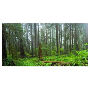 'Hoh Rain Forest' Photographic Print on Wrapped Canvas by Design Art