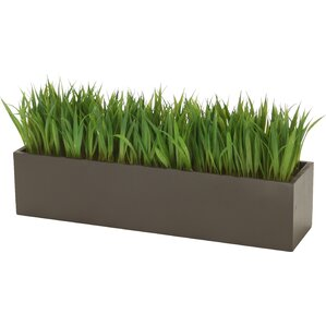 Charming Grass In Rectangular Wood Planter