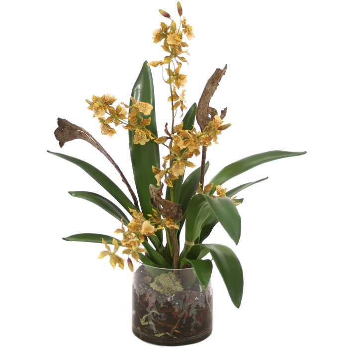 Vase Orchid White In On Background